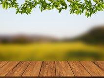 Деревянная текстура с листьями и предпосылкой ветви Деревянная стена grunge Стоковое Изображение