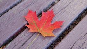 Деревянная текстура с кленовым листом Стоковая Фотография RF