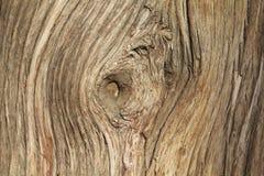 Деревянная текстура с twirl стоковые изображения