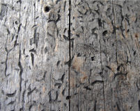 Деревянная текстура, текстура тимберса, предпосылка природы Стоковое Фото