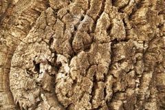 Деревянная текстура хобота стоковая фотография rf