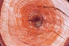 Деревянная текстура ядра Стоковое фото RF