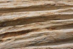 Деревянная текстура Стоковые Фото