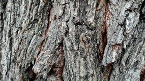 Деревянная текстура Стоковые Изображения