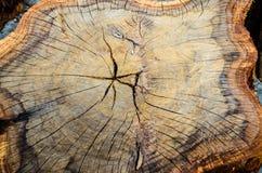 Деревянная текстура cutted ствола дерева Стоковое Изображение