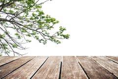 Деревянная терраса, ветви дерева с космосом экземпляра стоковое изображение