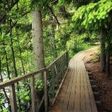 Деревянная тропа в лесах острова Valaam, России Стоковое Изображение