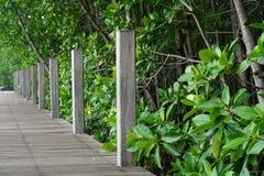 Деревянная тропа в лесе мангровы Стоковая Фотография RF