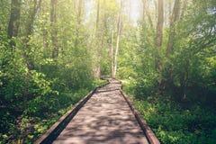 Деревянная тропа через древесины леса в утре Концепция перемещения и путешествия природы лета стоковые фото