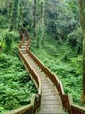 Деревянная тропа Стоковая Фотография RF