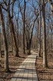 Деревянная тропа Стоковое фото RF