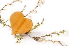 Деревянная форма сердца с зацветать разветвляет на белой предпосылке, Стоковое Изображение
