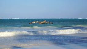 деревянная шлюпка, Matemwe, Занзибар стоковые фотографии rf