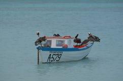 Деревянная шлюпка ` s рыболова с пеликанами на ей стоковая фотография
