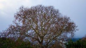 Деревянная Ялта Стоковая Фотография
