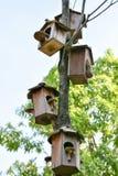Деревянное гнездо Стоковая Фотография