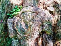 Деревянное животное Стоковое фото RF