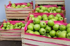 деревянное зеленого цвета пука коробки яблок зрелое Стоковая Фотография