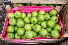 деревянное зеленого цвета пука коробки яблок зрелое Стоковые Изображения