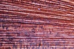 Деревянное зерно Стоковые Изображения RF