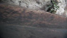 Деревянное каное в индейцах и Shuar Guarani хаты индигенных сток-видео