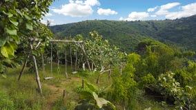 Деревянное качание веревочки Стоковая Фотография RF