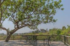 Деревянное крылечко с таблицей и стульями, и тенистое дерево стоковые фото
