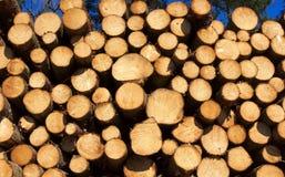 Деревянное лесохозяйство стога-я стоковое изображение rf