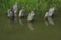 Деревянное отражение в воде Стоковая Фотография
