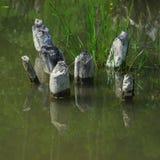 Деревянное отражение в мхе Стоковые Изображения