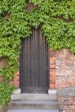 деревянное плюща двери старое Стоковое Фото