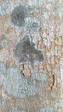 Деревянное резиновое дерево Стоковая Фотография