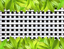 деревянное свежей панели листьев белое Стоковая Фотография RF