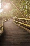 деревянное тропы пирофакела солнечное Стоковое Изображение