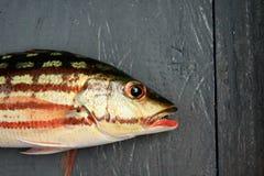деревянное floorboards рыб тропическое Стоковые Фото