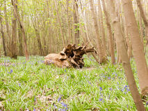 Деревянное Stumo дерева на поле леса Стоковое Фото