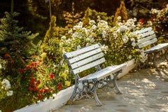 2 деревянной скамьи в саде Стоковая Фотография RF