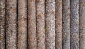 Деревянной стена планки картины журнала текстурированная предпосылкой Стоковые Изображения