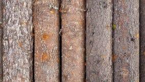 Деревянной стена планки картины журнала текстурированная предпосылкой Стоковые Фото