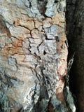 Деревянно текстура стоковые фото