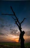 Деревянно умрите Стоковые Изображения