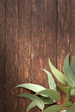 Деревянные австралийские листья предпосылки Стоковое Фото
