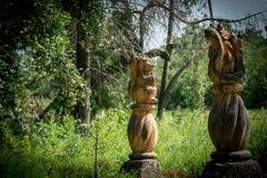 Деревянные белки в лесе Стоковое Изображение RF