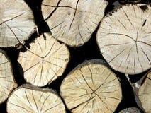 Деревянные вены хобота Стоковые Фотографии RF