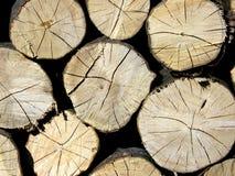 Деревянные вены хобота Стоковое Фото