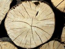Деревянные вены хобота Стоковое Изображение RF