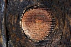 Деревянные волокна на ветви отрезка Стоковое Изображение