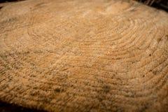 Деревянные годичные кольца Стоковое Фото