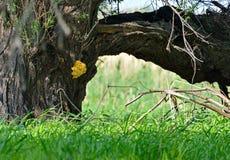 Деревянные грибы на дереве хобота Стоковое Изображение