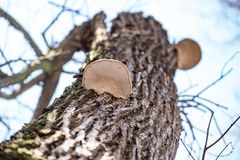 Деревянные грибы на хоботе дерева стоковое изображение